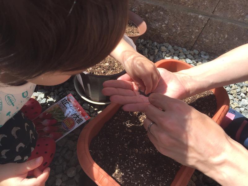 写真:家庭菜園の様子(野菜の種をつまんでいる様子)
