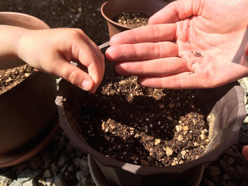 写真:家庭菜園の様子(種まき)