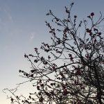 早咲きの梅の花が咲き始めました