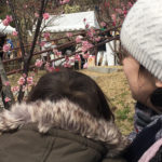 岡本梅祭り2018