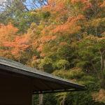葉っぱが色づいてきました